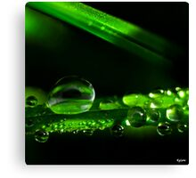 Droplets Canvas Print