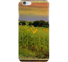 Alberta sunset sunflowers iPhone Case/Skin