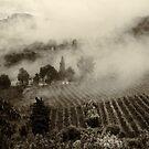 Misty morning by Silvia Ganora