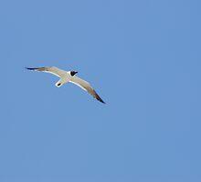seagull by Denise Benson