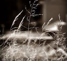 Graveyard Grasses by Karen E Camilleri