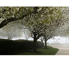 BLOSSOMS IN THE MIST Photographic Print