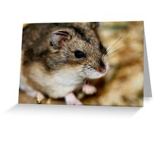 Siberian Hamster Greeting Card