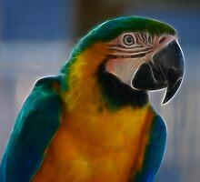 Pure Parrot by laureenr