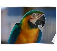 Pure Parrot Poster