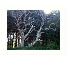 'Ghost Tree' at Holton Lee, Dorset Art Print