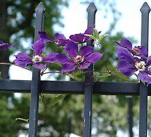 Beauty on a fence by Carol Smith