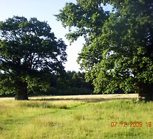 'Two Tree Field' by Songwriter