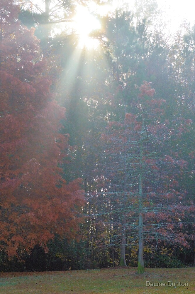 Through The Trees Is The Light by ©Dawne M. Dunton
