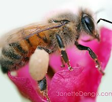Busy Little Bee by Janette  Dengo