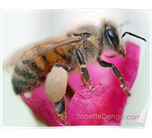 Busy Little Bee Poster