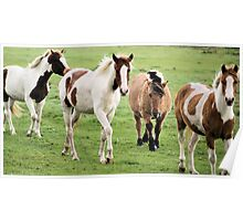 A herd of colorful horses Poster