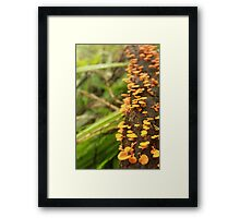 Fungus Among Us - 1 Framed Print