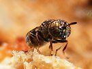 Psychedelic fly by elasita