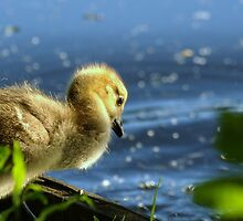 First Swim! by Franco De Luca Calce