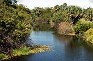 Ten Mile Creek by Larry  Grayam