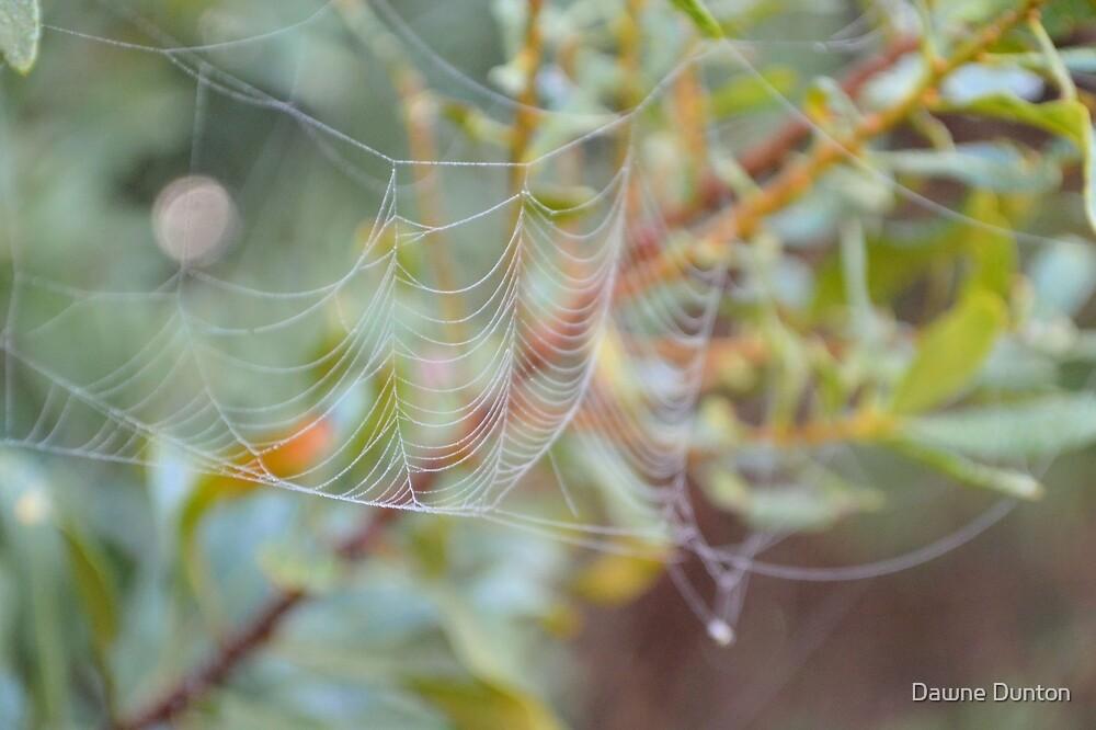 Fancy Web by ©Dawne M. Dunton