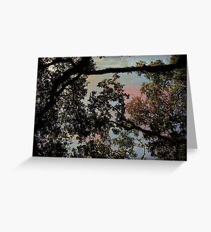Oak Trees Greeting Card