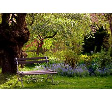 Peaceful Surroundings Photographic Print