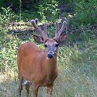 Beautiful Buck by Nora Caswell