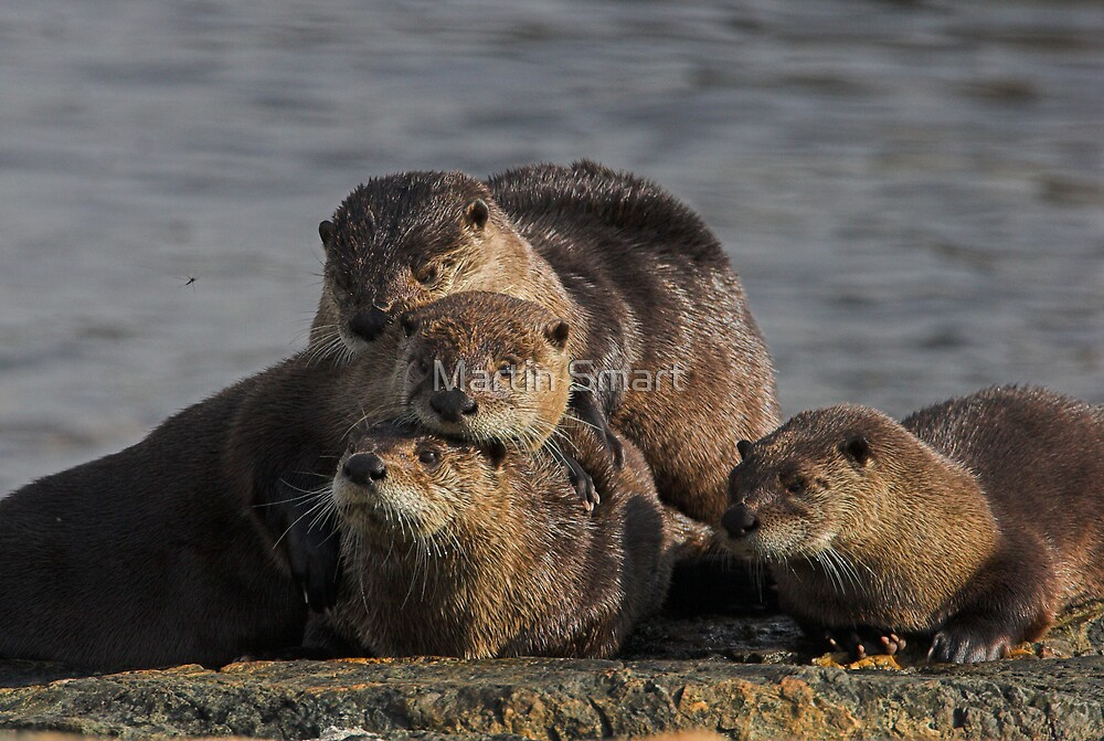 Whole Otter Love by Martin Smart