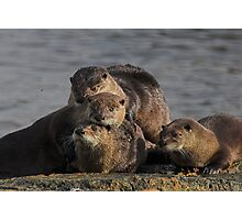 Whole Otter Love Photographic Print