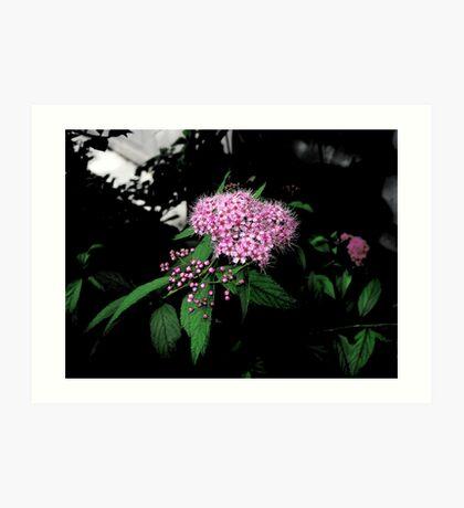 Buds & Blooms Art Print