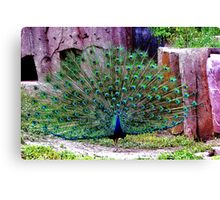 Rainbow Of Feathers Canvas Print