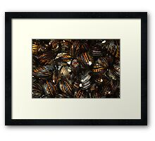 California Mussels Framed Print