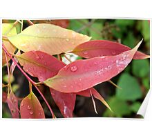 Dew on leaf Poster