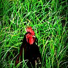 Crouching tiger hidden rooster by Destrier