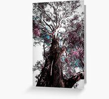 Australian Gum Tree Greeting Card