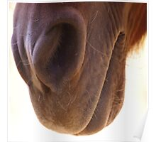 Miniature Horse Nose Smell The Happy Poster