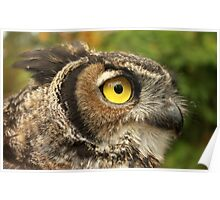 Darwin, A Great Horned Owl Poster