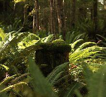 Moss everywhere - Kepler walk, Te Anau, New Zealand by fns720