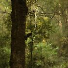 Game of light, Kepler walk, Te Anau, New Zealand by fns720