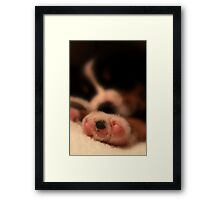 Tired? Paws-ibly...  Framed Print