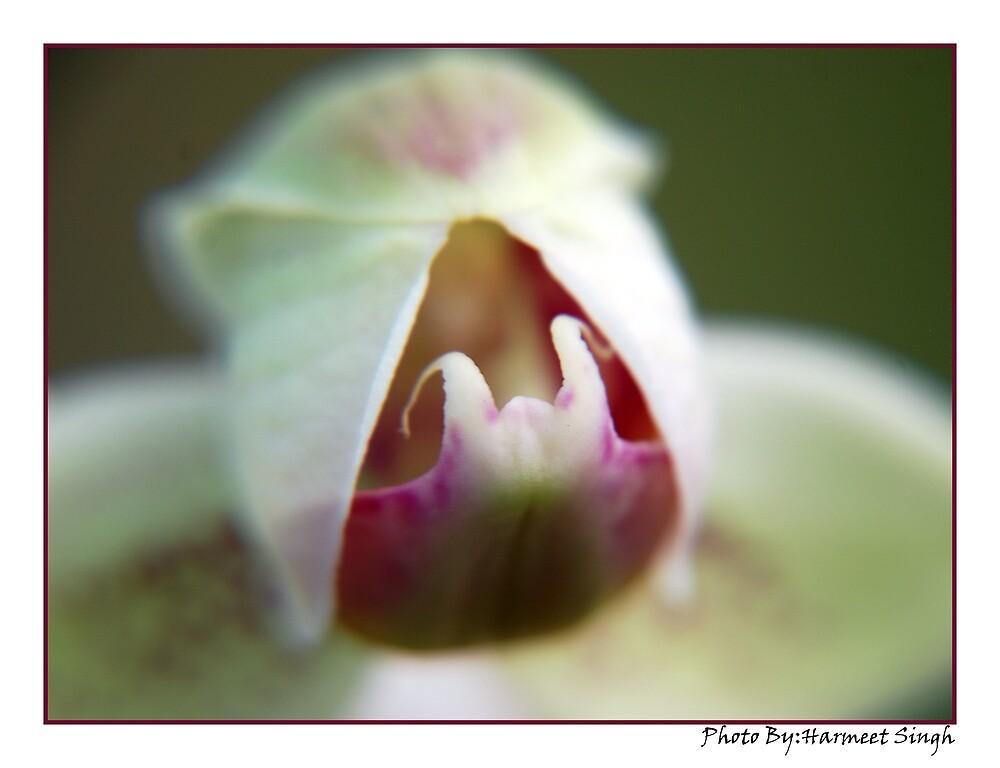 The inner beauty by Dr. Harmeet Singh