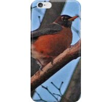 Red Robin in a Japanese Maple iPhone Case/Skin