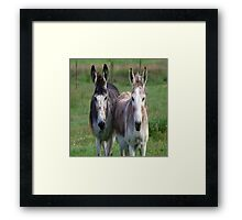 2 Hoties On The Farm Framed Print