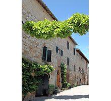 Fonterutoli Vineyard path Photographic Print