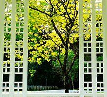 Framed.... by Tamara Travers