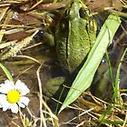 Hippie Frog by Olivia Burger