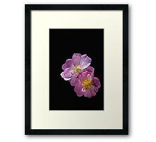 Bush Rose Duet Framed Print