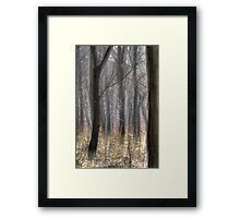 Movement of the Trees Framed Print