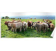 The Herd Poster
