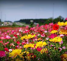 interstate wildflowers by Brandi  Sims