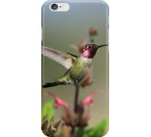 Ruby Throated Hummer Frozen With Style iPhone Case/Skin