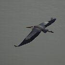 Blue Herron In Flight by Linda Mathews