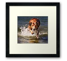 Isabella doesn't like to lay around the house Framed Print